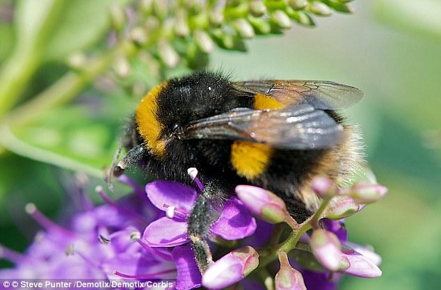 Bee 634x417